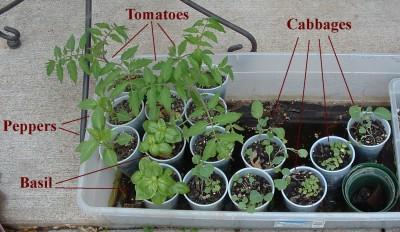 Plant Starts, May 15